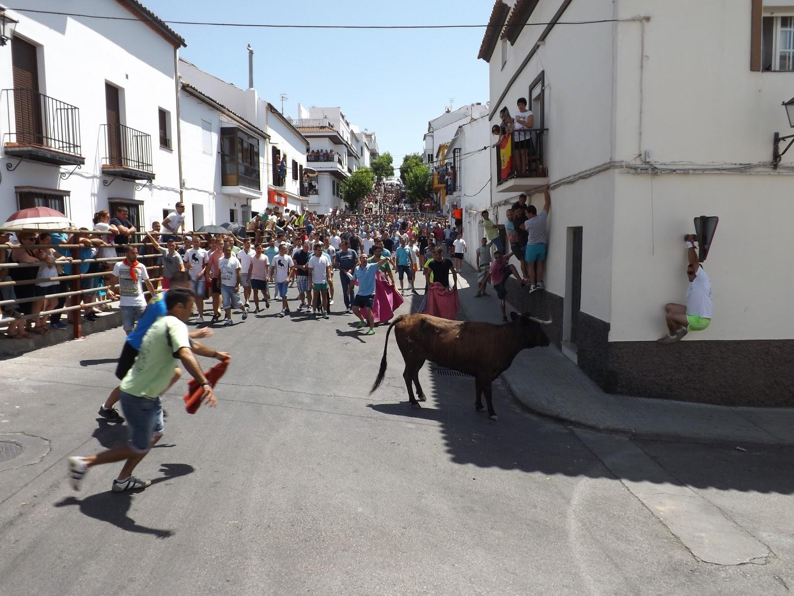Ruedos del sur eventos suelta de vacas en prado del rey - Tiempo en prado del rey cadiz ...