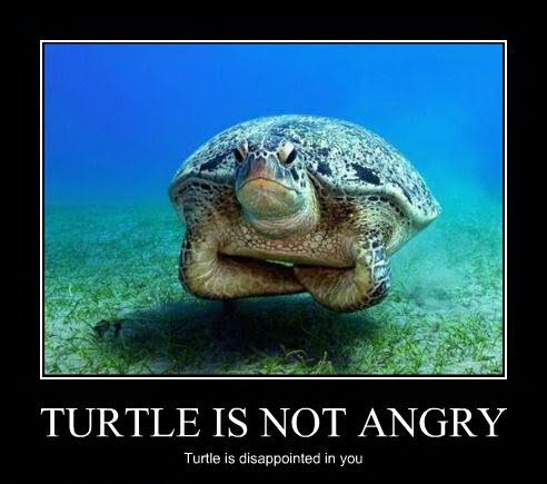 Turtle Is Not Angry - Turtle Is Disappointed In You