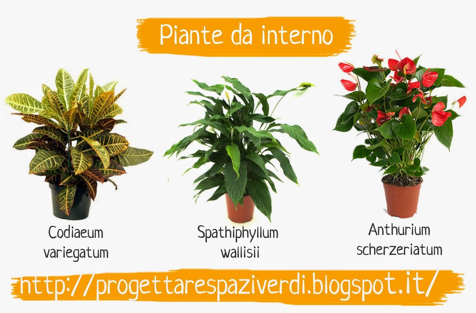 Progettare spazi verdi 3 piante da interno - Piante da interno verdi ...