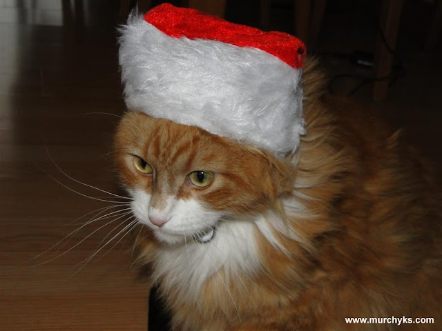 Murchyk the Cat being a Santa Claus