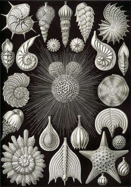 Formas de arte de la naturaleza