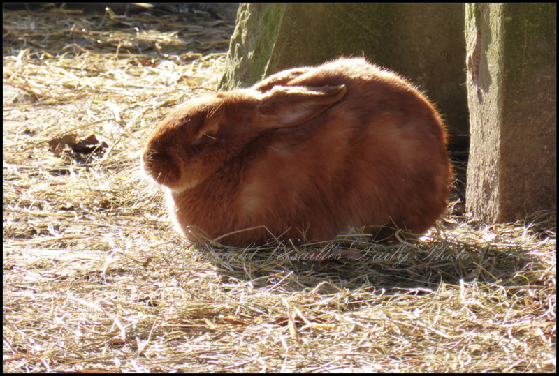 Rabbit Queen's hamlet Versailles