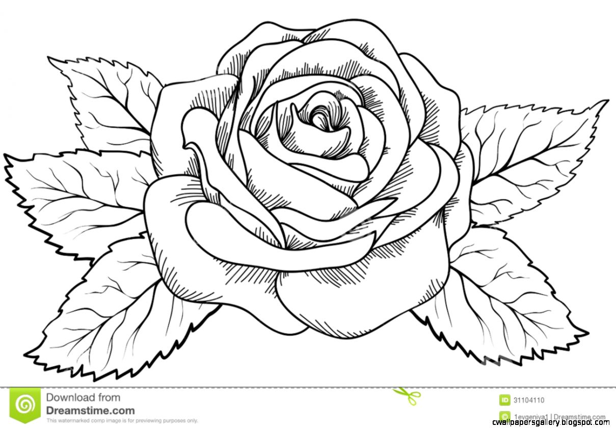 Black Rose Flower Sketch  Bouquet Idea