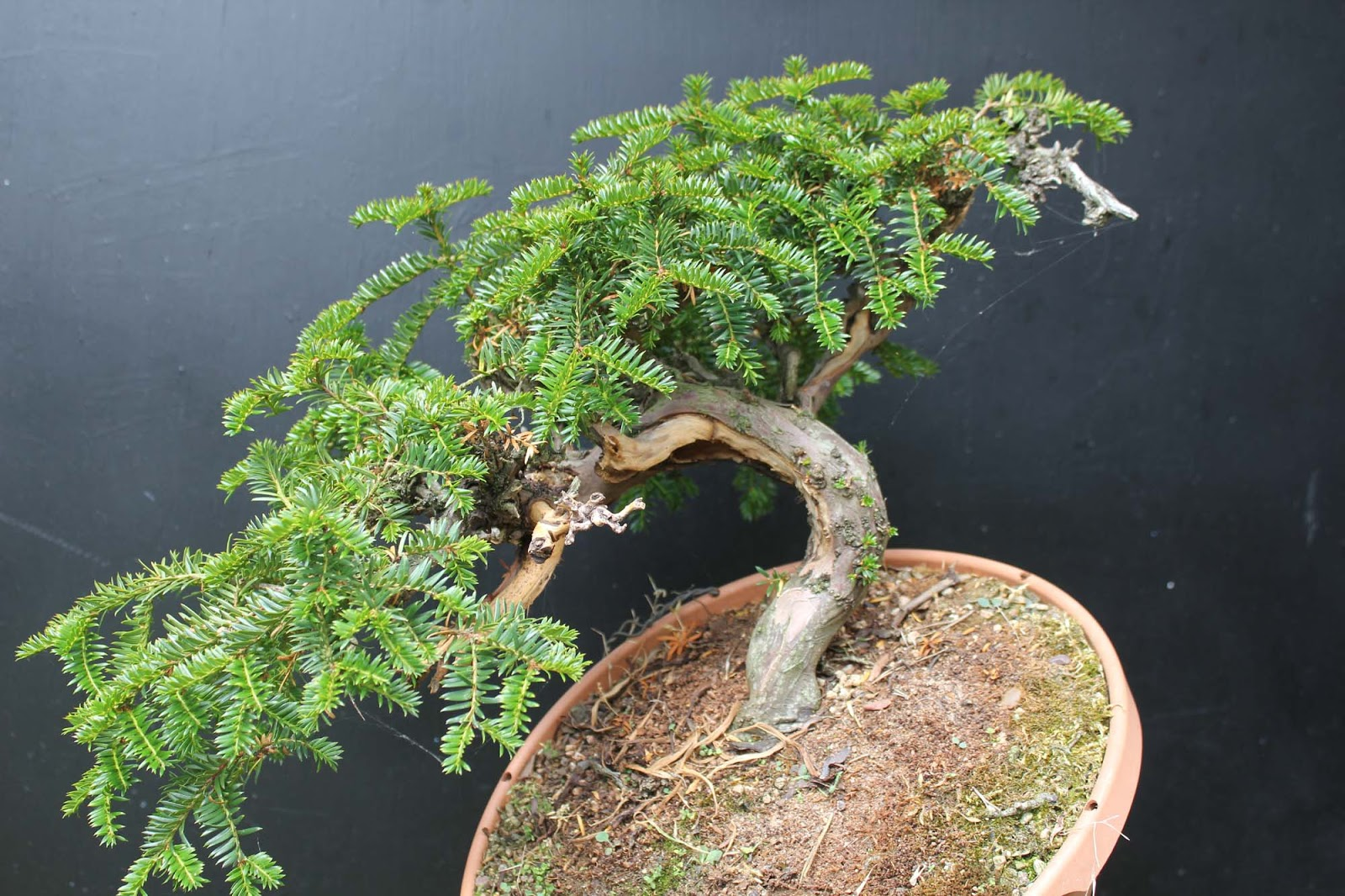 Wildwoodbonsai July 2013