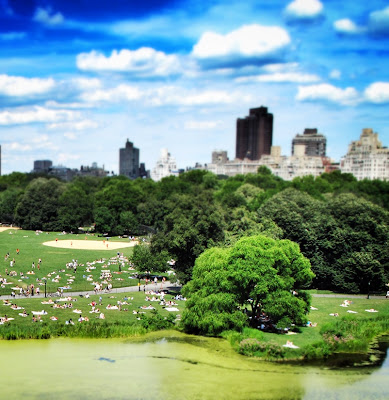 Central Park in New York City in the summertime
