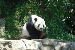 Panda in Washington (2011)