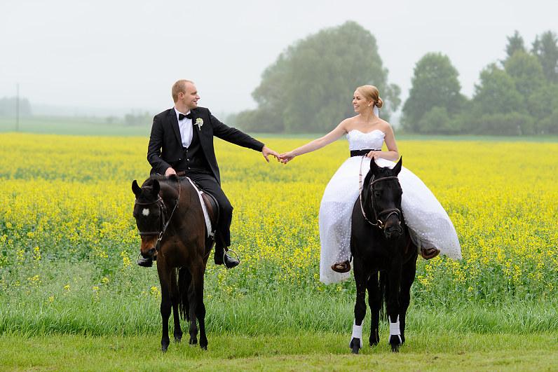 žirgai per vestuves bistrampolio dvare