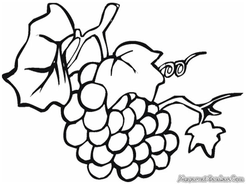 Download kumpulan gambar mewarnai buah anggur , koleksi 15 buah  title=