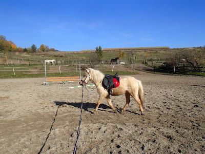 konie, kucyki, jazda konna, jazda w terenie, pensjonat dla koni w Węgrzcach