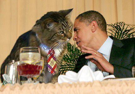 Фото: кот и Барак Обама