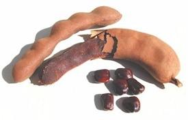 Tamarind pods