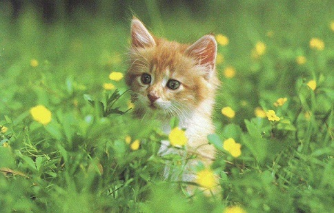 Cat Breeds Picture