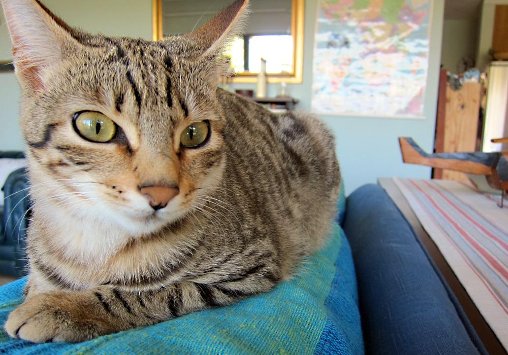Как путешествовать с котом - получение справок