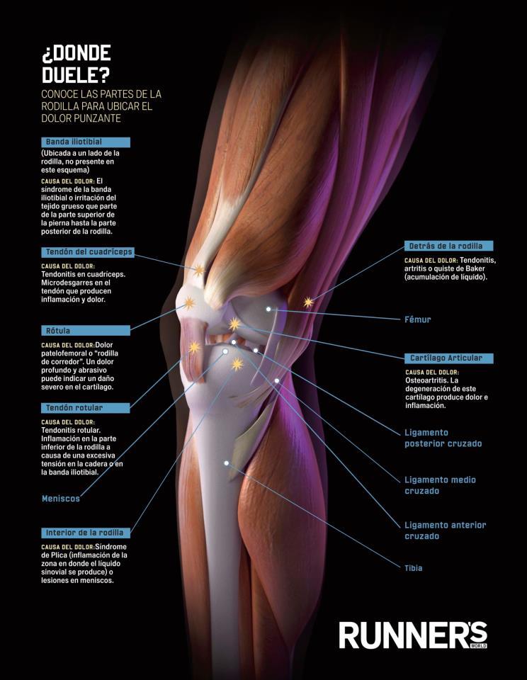 Kirol osasuntsua te duelen las rodillas - Dolor en la parte interior de la rodilla ...