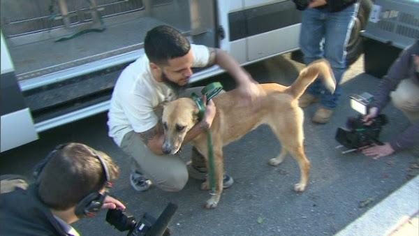 Perros rescatados de las calles de Sochi llegan a EE.UU. para su adopci�n