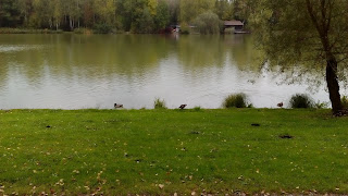 Raţe pe lacul Bürmooser See