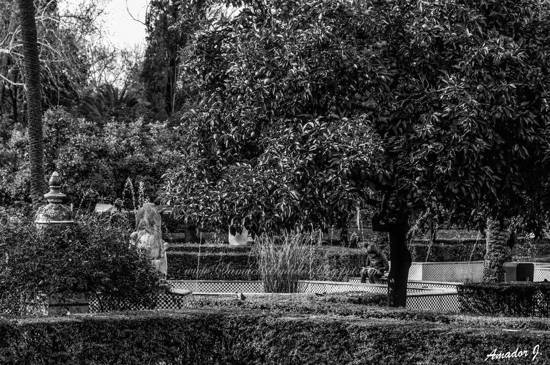 Samuel amador sevilla en blanco y negro parque m luisa y plaza de espa a parte ii - Blanco y negro ...