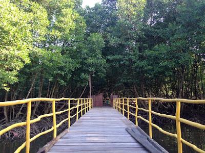Hutan Mangrove BSD