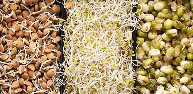 Чем полезны ростки пшеницы? Ростки пшеницы