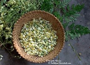 unusual greens : drumstick leaves in egg scramble..