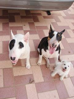 My Happy Family : ครอบครัวแสนสุข แพนด้า แพนเค๊ก ปีเตอร์แพน
