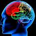 Segundo pesquisa, estrutura do cérebro pode determinar nossa visão política