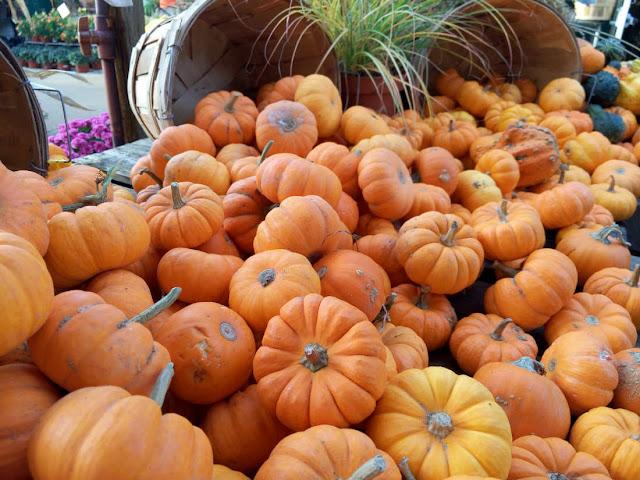 Halloween en Colts Neck - Vivero (foto: Otro día Perfecto)