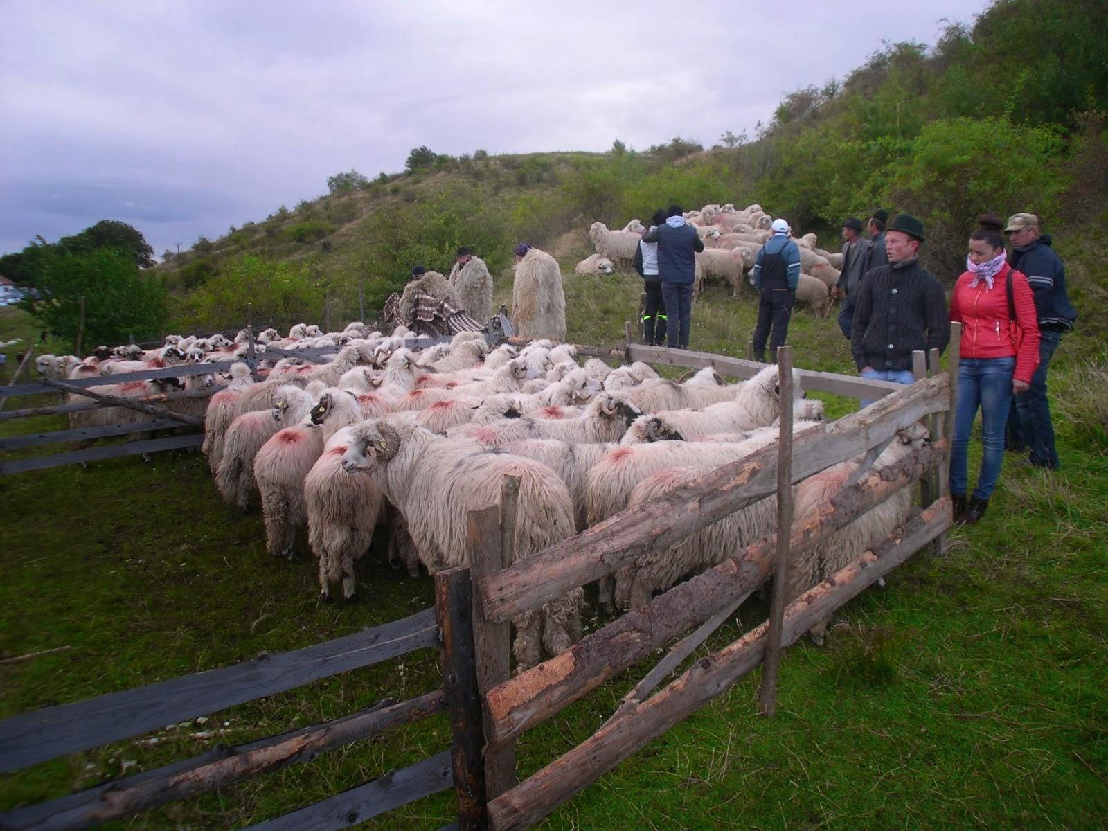 Animal fair 10