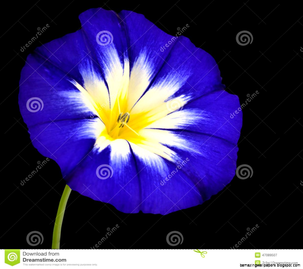 Yellow And Blue Flower White Background Amazing Wallpapers