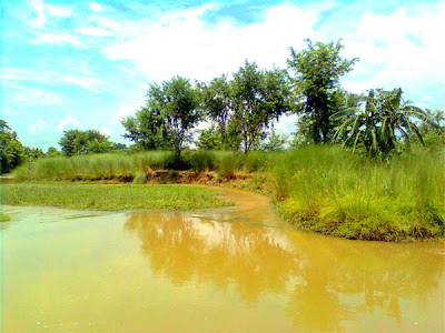 Landscape Photograph of a Stream