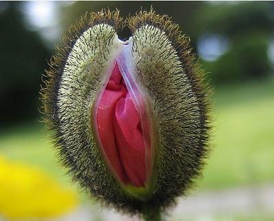 pussy-flower.jpg