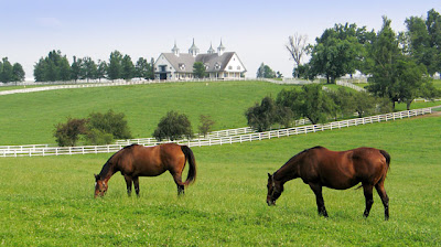 two mares grazing in green fields with white fences and barns with three spires in the background