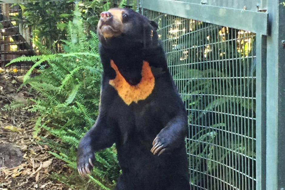Hewan di Kebun Binatang Perth Rayakan Natal