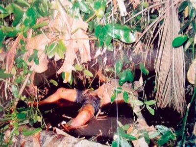 Mayat membusuk di kebun getah