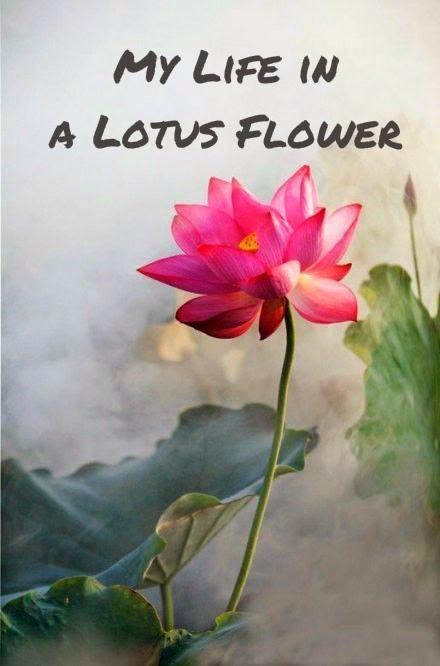 lotus tattoo, lotus flower, my tattoos,