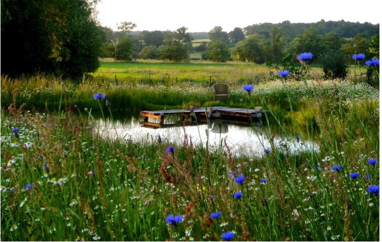 Il giardino delle naiadi bulbose per giardini acquatici for Fiori acquatici