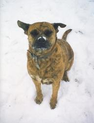 Peyton (1994 - 2010)