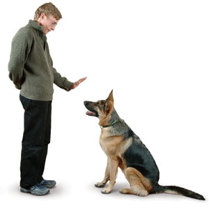 training dogs the easy way
