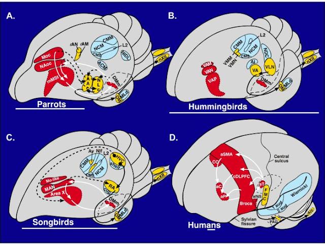 Brain Evolution3
