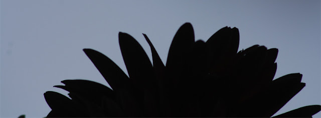 Black Flower's Patel