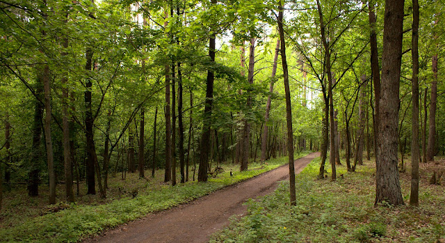 природа, лес, прогулка, свежий воздух, деревья