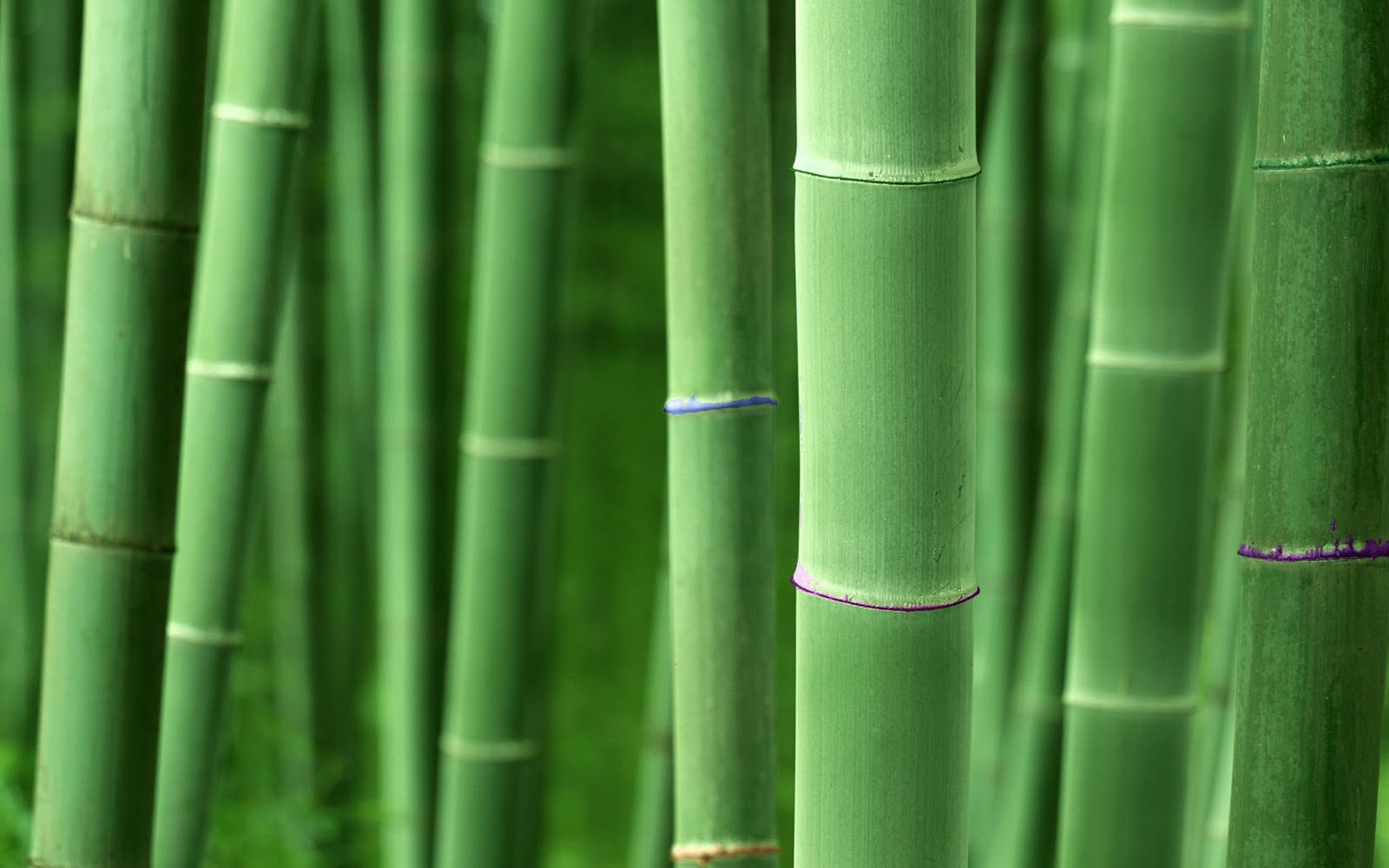 High resolution bamboo plant backgrounds hd nature for Bamboo wallpaper for walls