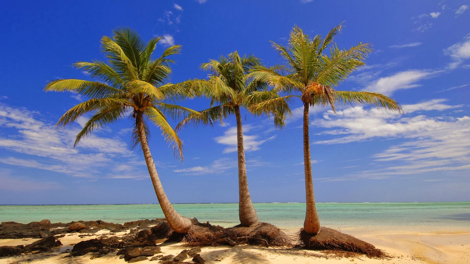 Palms View Wallpapers