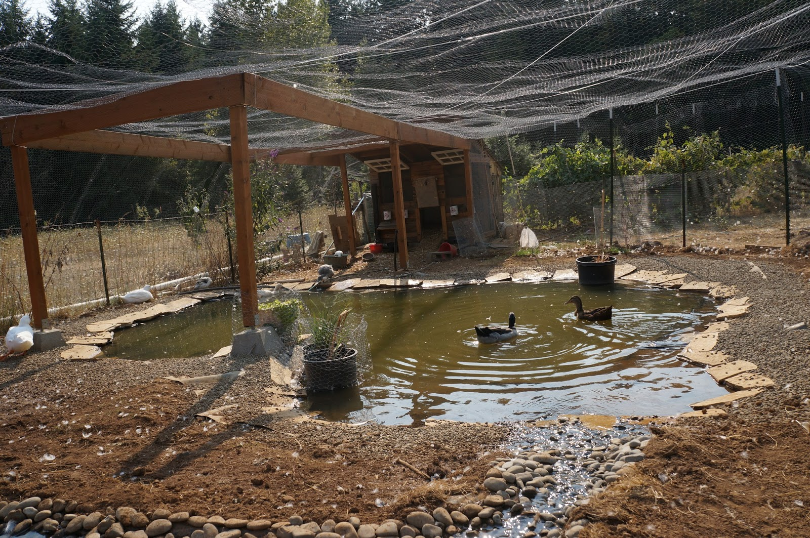 Duck Duck Dog: How to Build a Duck Pond