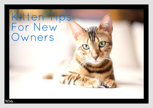 Kitten Tips For New Owners & Marley Update # 2
