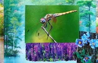 Wisdom of Dragonfly - (7th Chakra)