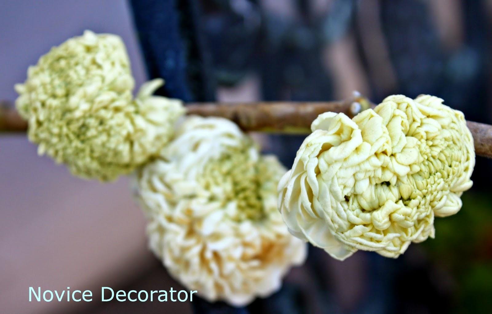 Novice Decorator From My Garden Jasmine