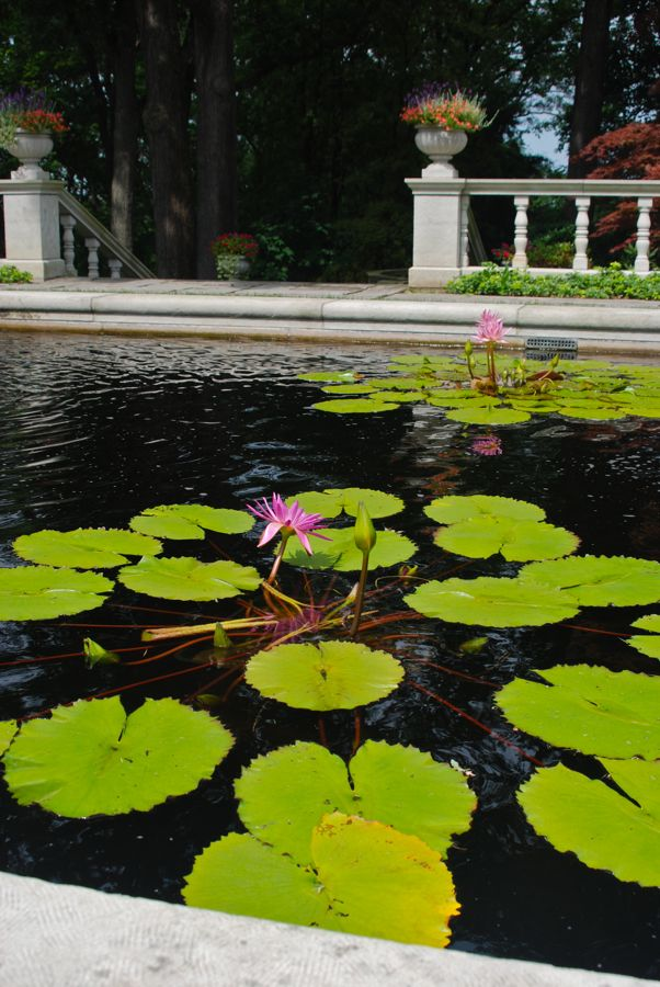 Wife, Mother, Gardener: Waterlily pool at Stan Hywet Hall & Gardens ...