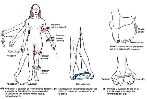 GENERALIDADES DE ANATOMÍA | Morfofisiología I