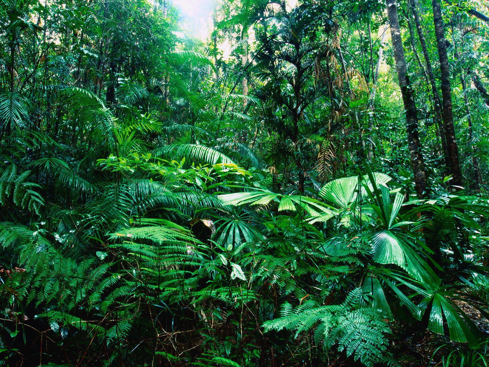 Tropical Rainforests - Green Plants On The Earth
